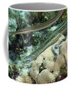 A Pair Of Trumpetfish Off The Coast Coffee Mug