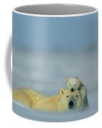 A Polar Bear Cub Finds A Peaceful Coffee Mug