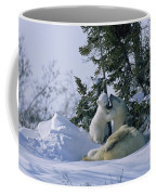 A Polar Bear Cub Plays With Its Resting Coffee Mug