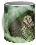 A Portrait Of A Captive Burrowing Owl Coffee Mug
