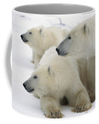 A Portrait Of A Polar Bear Mother Coffee Mug