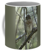 A Red Shouldered Hawk Perches In A Tree Coffee Mug