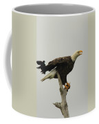 A Red Wing Black Bird Attacks A Bald Coffee Mug