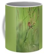 A Scarlet Grosbeak Perched On Grass Coffee Mug