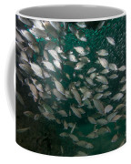 A School Of Tomtate And Glass Minnows Coffee Mug by Michael Wood