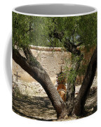 A Shady Rest Coffee Mug