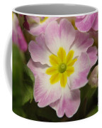 A Shy Flower  Coffee Mug