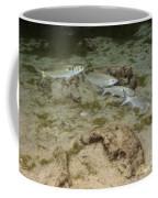 A Small School Of Grey Mullet Swim Coffee Mug