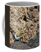 A Spider With The Egg Sack Square Coffee Mug