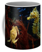 A Spotted Young Blue Crab, Callinectes Coffee Mug