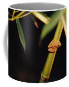 A Spring Peeper Frog Perches Coffee Mug by Raymond Gehman