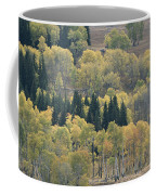A Stand Of Aspen And Evergreen Trees Coffee Mug