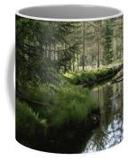 A Stream Wanders Through A Lush Taiga Coffee Mug