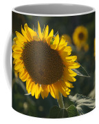 A Sunflower Bows To Its Own Weight Coffee Mug