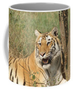 A Tiger Lying Casually But Fully Alert Coffee Mug