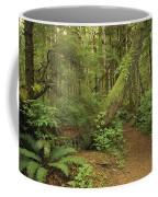 A Trail Cuts Through Ferns And Shrubs Coffee Mug
