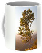 A Tree Outlined By The Rays Of The Setting Sun At Pachmarhi Coffee Mug