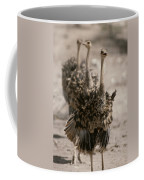 A Trio Of Ostriches, Struthio Camelus Coffee Mug
