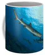 A Trio Of Whitetip Reef Sharks, Kimbe Coffee Mug