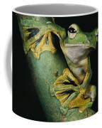 A Wallaces Flying Frog, Rhacophorus Coffee Mug by Tim Laman