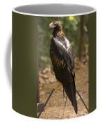 A Wedge-tailed Eagle At A Wild Bird Coffee Mug
