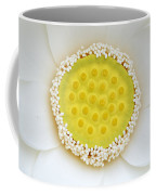 A White Lotus In Its Early Stage Coffee Mug by Stephanie Lane