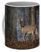 A Wild Deer Caught In Early Morning Coffee Mug