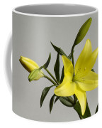 A Yellow Lily Lilium Canadense Coffee Mug