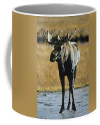 A Young Bull Moose Coffee Mug