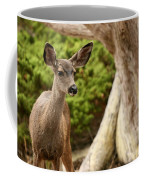 A Young Deer In A Grove Of Rare Coffee Mug by Charles Kogod