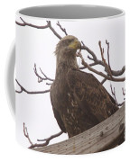 A Young Eagle In The Midst Of Change  Coffee Mug