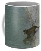 A Young Mountain Lion Prepares To Take Coffee Mug