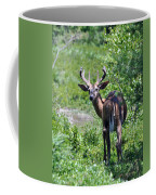 Acadia Buck Coffee Mug