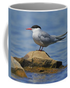 Adult Common Tern Coffee Mug