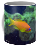 African Anthias Coffee Mug