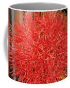 African Blood Lily Or Fireball Lily Coffee Mug