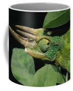 African Male Jacksons Chameleon Coffee Mug