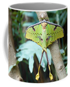 African Moon Moth 1 Coffee Mug
