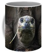 Aldabra Tortoise Coffee Mug