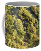 Algae Bloom In A Pond Coffee Mug