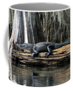Alligator Sunning Coffee Mug