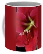 Amaryllis Flower Coffee Mug