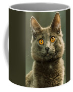 Amber-eyed Domestic House Cat Coffee Mug