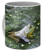 American Bull Frog Coffee Mug