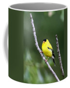American Goldfinch - Single Male Coffee Mug
