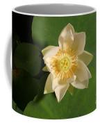American Lotus Nelumbo Lutea Opening Coffee Mug