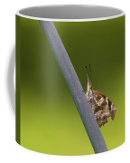 American Snout Butterfly - Libytheana Carinenta Coffee Mug