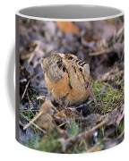American Woodcock Bird Coffee Mug
