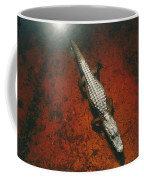 An Alligator Walks On The Muddy Bottom Coffee Mug