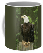 An American Bald Eagle Perches Atop Coffee Mug